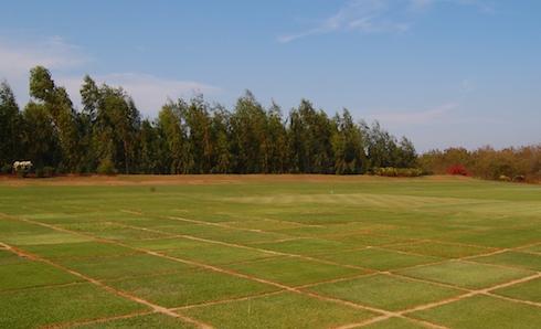 Grass type 3