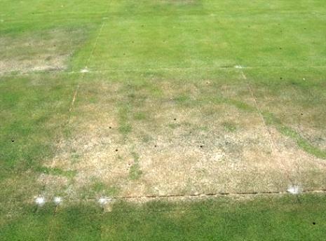 Phosphorus deficient bentgrass at Wisconsin