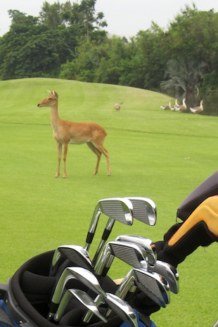 Golf_course_wildlife_thailand