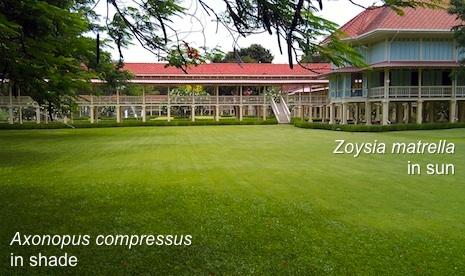 Carpetgrass_zoysia