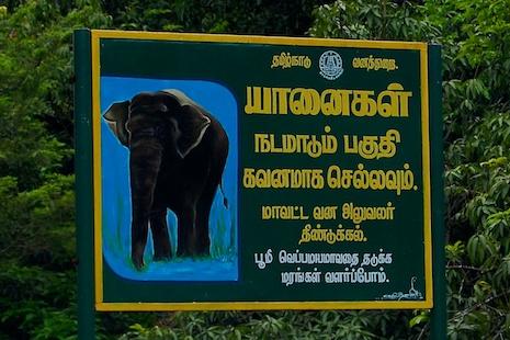 Elephant-warning