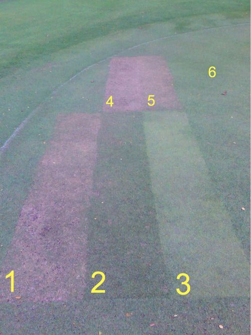 Grass-test