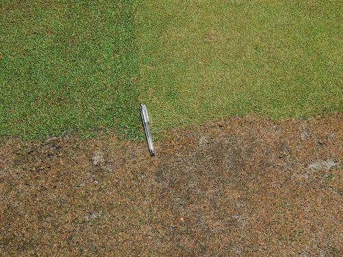 Grass-test-4-corners