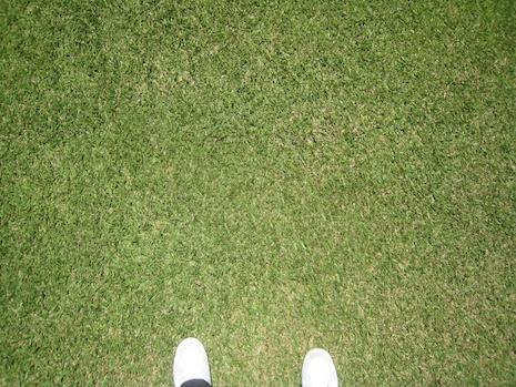 Carpetgrass