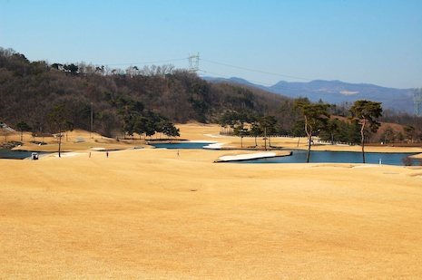 Zoysia-fairway-korea