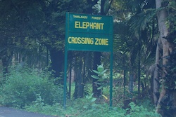 Elephant_crossing_zone_tamil_nadu