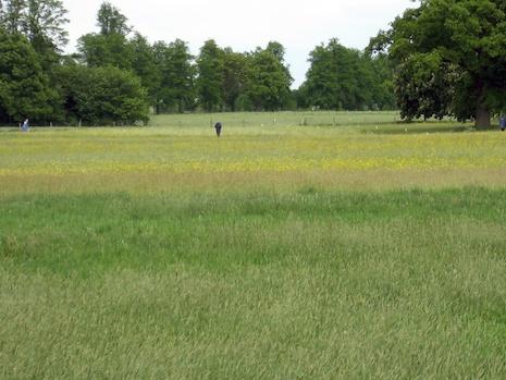 Park_grass2006
