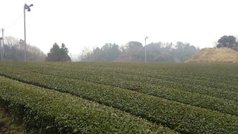Tea_fan