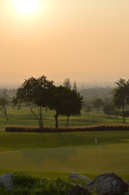 Sunset_banyan