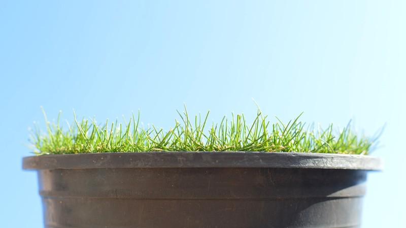 Grassy_sky